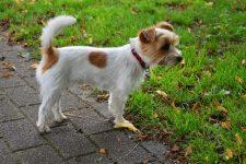 Trente-huit chiens saisis dans un élevage canin