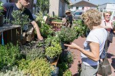 Un «troc de plantes» pour sensibiliser au jardinage bio