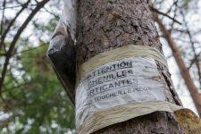 Des nids pour attirer lesprédateurs des chenilles urticantes