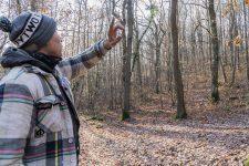 L'accrobranche ouvre en avril aucœur de la forêt des Grands bois