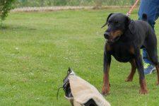 Une exposition canine au parc Jean Boileau
