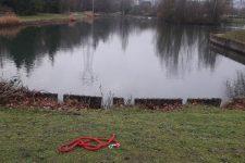 Attaqué par trois chiens, il saute dans l'étang