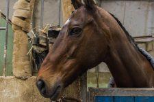 Horse-ball: le club de Chapet à l'arrêt